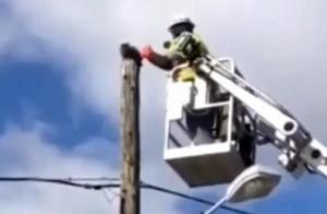 猫咪被困电线杆12小时 暖男工人伸援手却遭停职