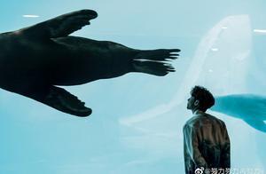"""190429 张艺兴分享多张与海狮的合照""""这海狮真大"""""""