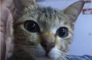 猫咪咬断主人耳机线赔条蛇,喵子:都是长条形的,你凑合用吧