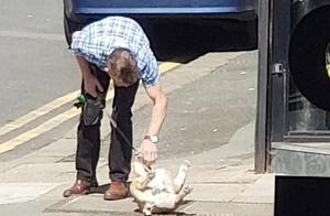 英国街头小狗躺在人行道上不肯走 与主人僵持7分钟