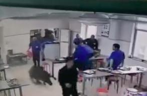视频丨注意!宁海南溪村有野猪出没 冲进一企业食堂咬伤一人