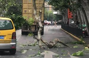 今晨北京西路集卡车撞断梧桐树干,未造成人员伤亡
