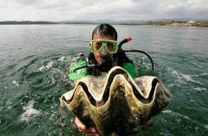 韩国女演员在泰国被捕 因录节目时捕捉了濒危的巨型蛤蜊