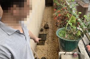 小榄男子网购野生陆龟当宠物,因非法收购珍贵濒危野生动物被抓