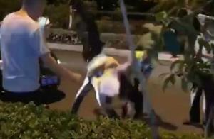 交警遭突袭被过肩摔!蚌埠发生惊人疑似袭警事件