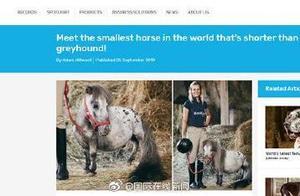 真·矮马波兰发现世界上最小的马!高度仅为56厘米