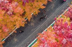 霜叶红了,来一览祖国山河的壮美