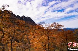湖北神农架秋意浓 走进镜头下的秋日童话世界