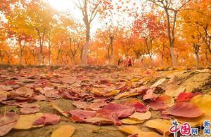 北京赏秋又添新宠 昌平七孔桥花海尽现多彩秋色