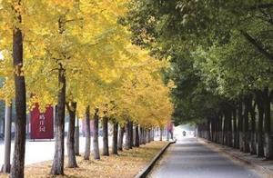 """上海迎最美落叶季""""落叶不扫""""景观道增至42条"""