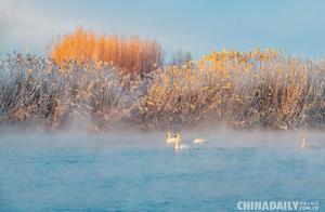 冬季水面不结冰 新疆伊宁天鹅泉好似童话世界
