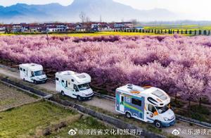 惊艳!陕西汉中勉县新街子的千棵美人梅开啦