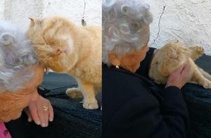 走失4年重逢奶奶!橘猫用头拼命磨蹭