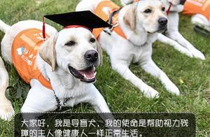 5月起,安徽将可携带导盲犬依规出入公共场所