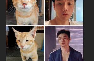 杨丞琳晒李荣浩与单眼皮猫咪对比图,亲自认证眼小