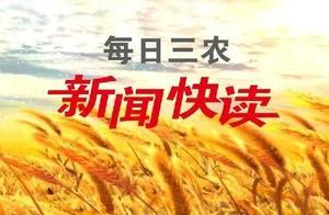 四川大春粮食丰收在望 预计增产2.5亿公斤