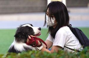 日本首现宠物狗新冠病毒检测呈阳性