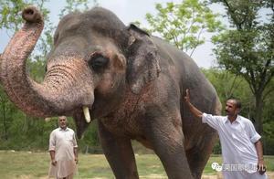 从小被当赚钱工具,35年后,世界上最孤独的大象终于解放了..