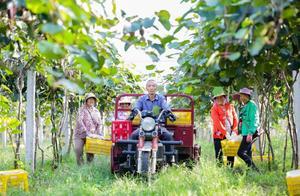 淘宝:助力中国农业升级的引擎
