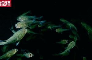 极为罕见!千岛湖水下摄影师偶遇惊人一幕,太震撼