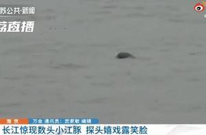 南京长江江面现数头小江豚,网友:好可爱,一定要好好保护
