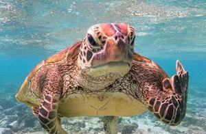 """美国""""生而自由基金会""""的搞笑野生动物摄影奖进入决赛的摄影作品 海龟举中指成焦点"""