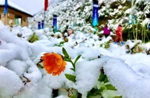 第一场雪来了!九寨沟、黄龙、四姑娘山开启雪景模式