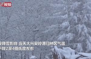 大兴安岭满归林区积雪超20厘米,网友:我也想要这样的雪天