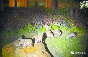 """""""擅喂或引发其它野生动物种群失控""""专家吁禁止擅自投喂动物"""
