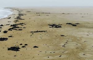 5000只海豹幼崽尸体惊现纳米比亚海岸,疑早产饿死