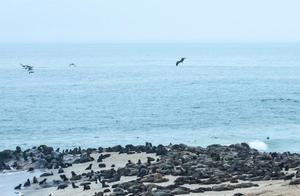 纳米比亚海岸现5000多头小海豹尸体,原因正调查