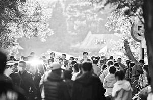 昨三万人香山赏红迎首个游览高峰