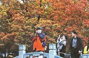 香山赏红叶 首个高峰至