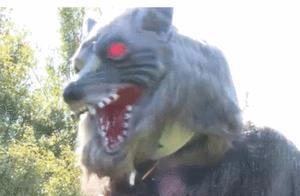 """为防熊出没,日本居民区摆出红眼机器""""魔鬼狼"""""""