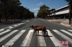 """再也不怕误食!日企推出""""鹿纸""""纸袋保护奈良鹿"""