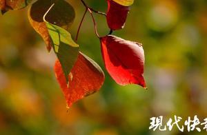 冷空气在路上,本周江苏西北部最低4℃,还有霜或霜冻