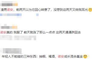 """诺安成长过山车式基金引争议 8成仓位豪赌电子行业""""黑红""""都出圈"""