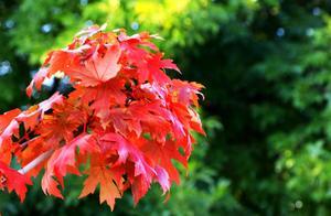红了!日照五莲这些地方惊艳了秋天,赶紧来打卡吧