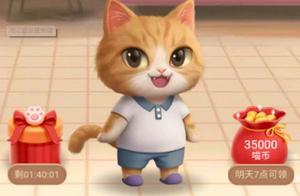 淘宝天猫双十一养猫兴趣怎么选 说唱舞蹈歌手三种猫选哪个好