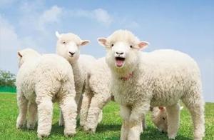 「直播预告」久等了!有羊自蒙古来,快集合