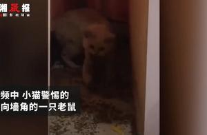 宠物猫在家捕4只老鼠整齐摆一起,网友:这年头懂业务的猫不多了