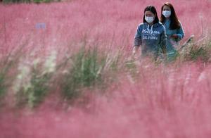 9人接种流感疫苗后死亡 韩国暂不叫停接种