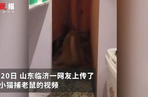 宠物猫在家捕4只老鼠整齐摆一起,主人被吓到腿软