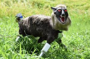 """日本居民利用具有发光眼睛的""""怪兽狼""""机器人来吓跑熊等野生动物"""