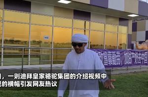 火了!迪拜一牧场挂上中文横幅:发家致富靠勤劳,加油产奶去中国