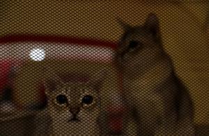 虐猫男子家属道歉,当事人开除了之?虐待动物的法律空白怎么补