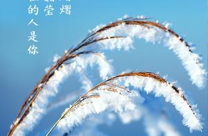 霜降丨愿你染尽霜华,心中温存如初