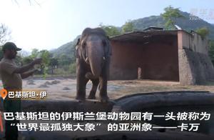 """""""世界最孤独大象""""退休,从巴基斯坦被送往柬埔寨安享晚年"""