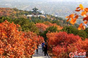 京城看红叶不必扎堆儿去香山 看看你家附近有哪些赏红胜地