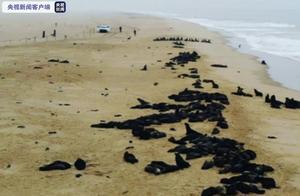纳米比亚7000多头海豹神秘死亡